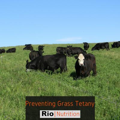 Rio Grass Tetany
