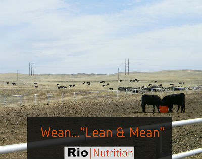 Weaning Solutions